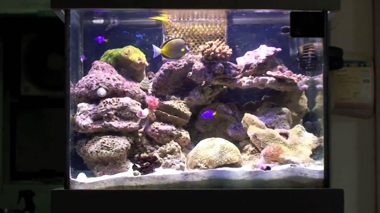 New 24 gallon nano reef aquarium setup part 1 youtube for Nano saltwater fish