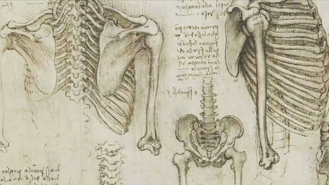 Decenas de dibujos de Leonardo Da Vinci disponibles en internet ...