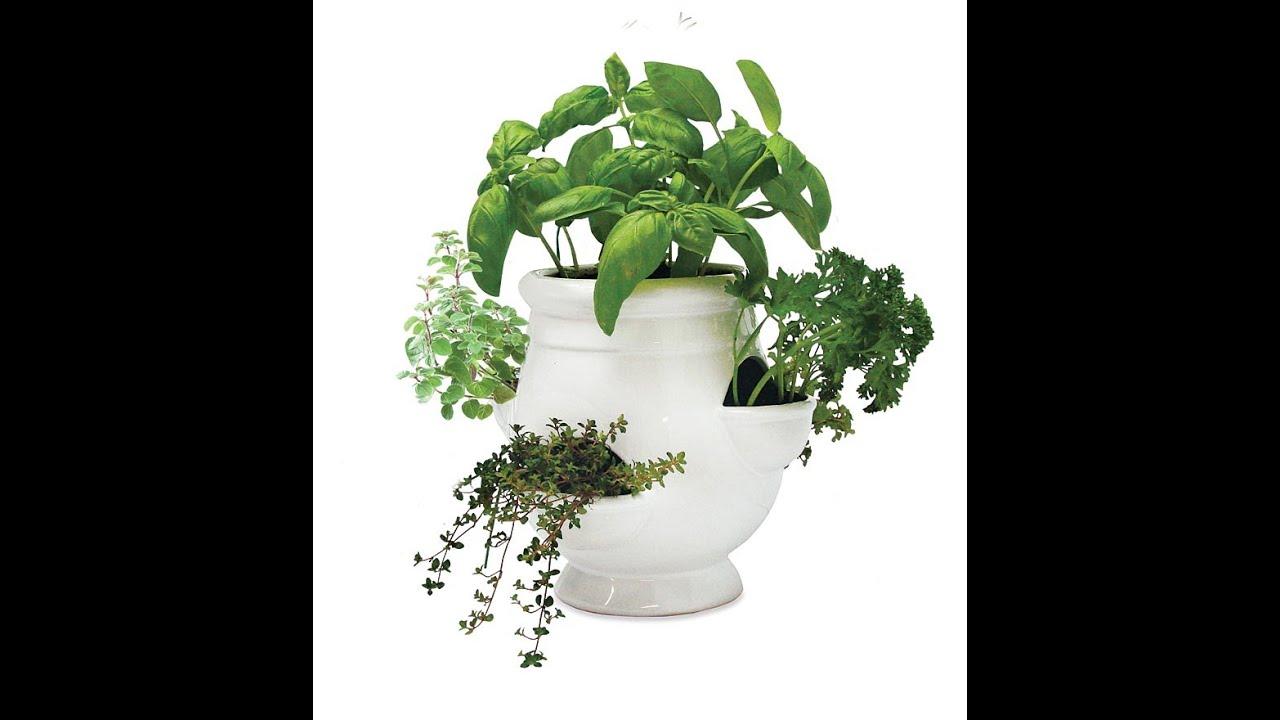 Garden Hydroponic Herb Garden YouTube