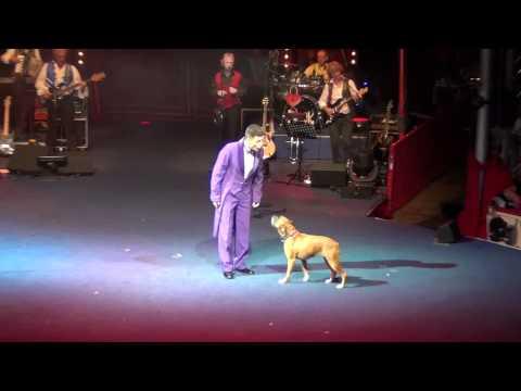 Boxer Dog in Roncalli Circus 2012.mp4