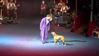 Boxer Dog In Roncalli Circus 2012.mp4