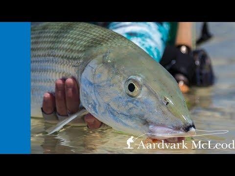 Bonefish Run - One Minute Monday