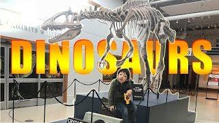 Suasana Museum Amerika, Fosil DINOSAURUS