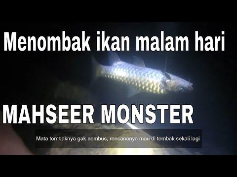 MENOMBAK IKAN MALAM HARI DAPAT MAHSEER MONSTER