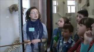 видео Отзыв об экскурсии в Зоологический музей МГУ