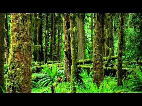 Nature Sounds: Crickets, Frogs & Birds【Rainforest, Jungle, Beautiful Night Sounds】HD