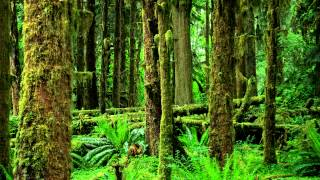 Nature Sounds: Crickets, Frogs & Birds【Rainforest, Jungle, Beautiful Night Sounds】HD