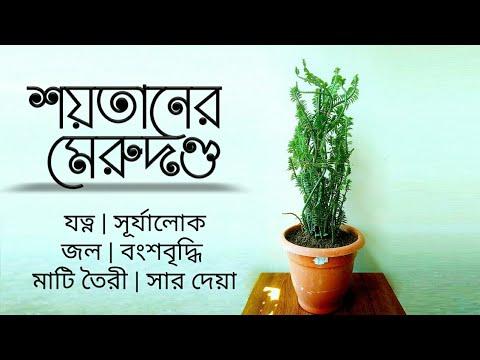 devil-backbone-plant-care-|-indoor-plant-|-pedilanthus-plant