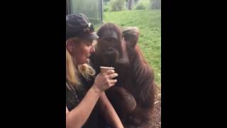 Смышленный орангутанг