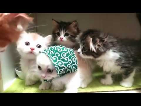 Funny cat fails - Try not to laugh 2019