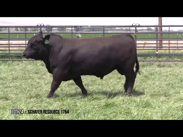 Mid Valley Bull Sale Lot 24