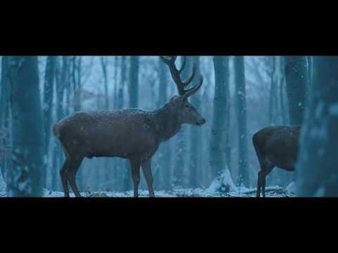 Laura Marling - What He Wrote / OST Testről és lélekről (Music video)
