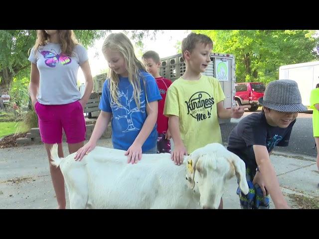 Goats take over Boise, Idaho, neighborhood: KTVB noon newscast
