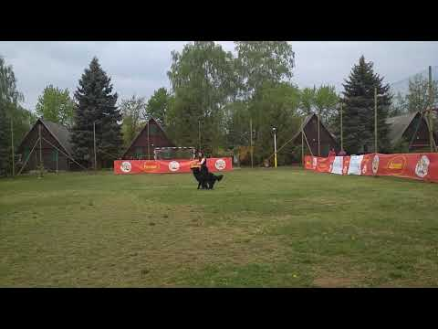 Husse Dog Dancing Cup - Walle hobby kezdő 1. hely