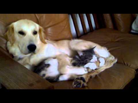 Hund Und Katze Lustig