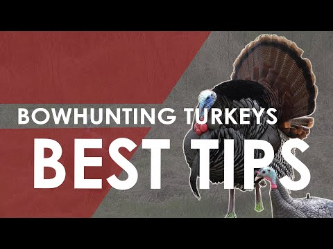 Bowhunting Turkeys Guide - 5 Best Tips To Get You Started