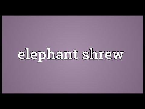 Elephant shrew Meaning
