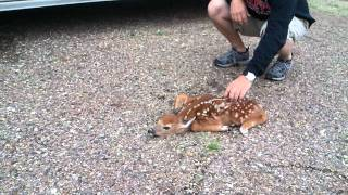 Baby Fawn's Defense mechanism