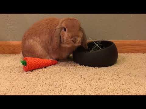 Meet Winston ~ Pet Tag 🐰