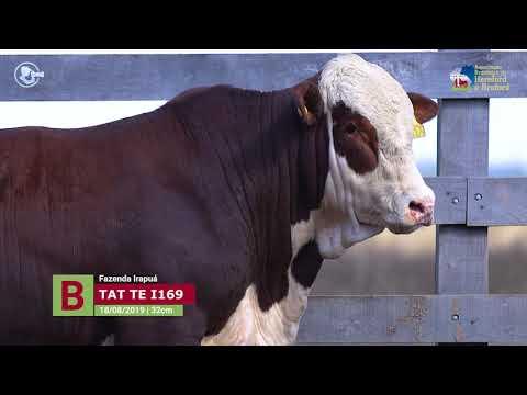 Touro TE I169 - Fazendas Irapuá