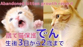 【50本目感謝】捨て猫保護 ゴミ袋からの救出 生後3日から2歳までのまとめ:でんの成長記録