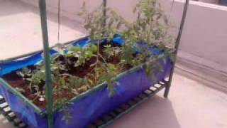 Roof Top Vegetable Garden Module In Bangalore, India