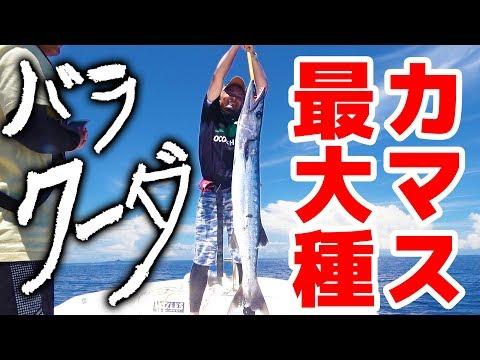 危険すぎる巨大オニカマスと剛腕ファイト!【ハイサイ水族館#5】