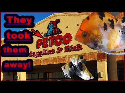Petco Took ALL My FISH! Hope You Guys Understand! :(