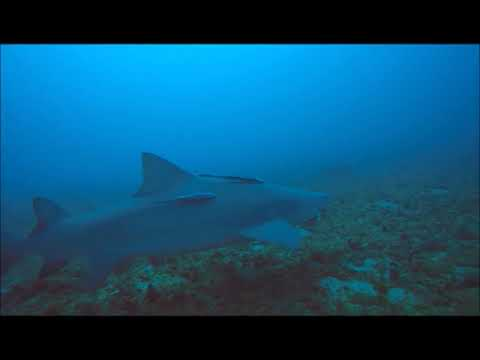 ADI Dives | Jupiter Beach Shark Dive, Feb  17, 2018