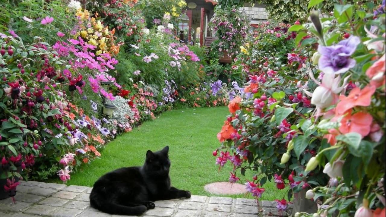 Лучший английский сад 2007 года - сад Эдвины Фран.Пять приемов создания маленького сада.