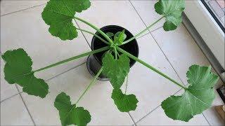 Огород - установка парников, энзимы,  пересадка томатов, первые цветы / Garden 2018 06