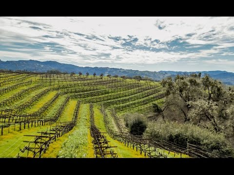 wine article Anderson Valley Estate Mendocino County California