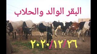 اسعار البقر الوالد والحلاب اليوم بسوق السبت بأسنا[ اسعار خيالية ]