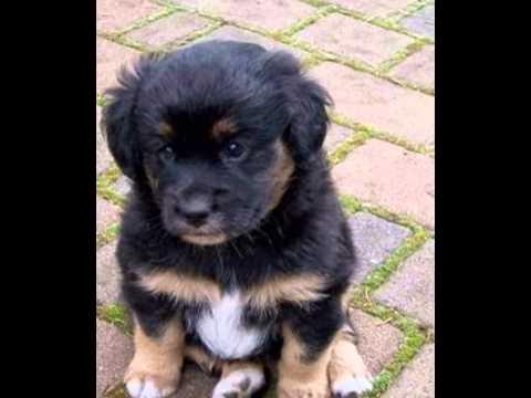 5 S 252 223 E Hunde Bilder Youtube
