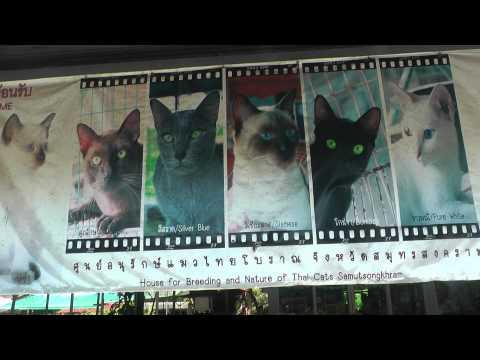 Ban Maeo Thai Boran, Siamese Cat House, Samut Songkhram, Thailand