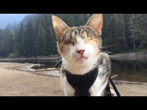Семья сжалилась и приютила слепую кошку! Но того, что случилось дальше, от кошки не ожидал никто