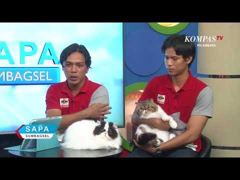 DIALOG SAPA SUMBAGSEL INTERNATIONAL CAT SHOW PALEMBANG 2017