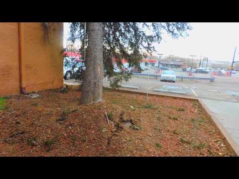 Tree Falls on Car in Windstorm