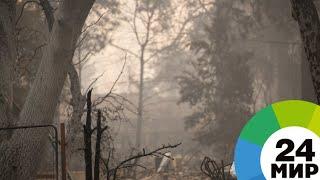 Пожары в Калифорнии: судьба 1300 человек остается неизвестной - МИР 24