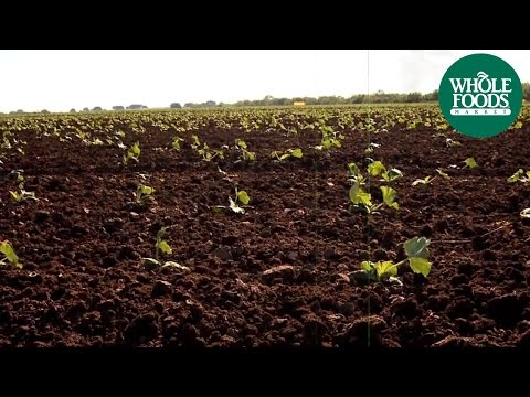 Organic Farming | Company Info | Whole Foods Market