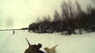 Охота на выпускного фазана