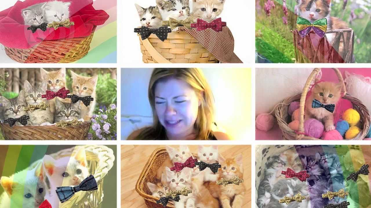 I Like Cats Eharmony