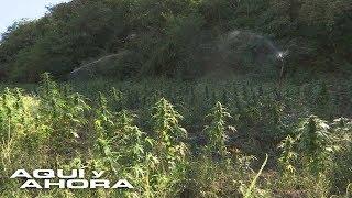 ¿Cómo funciona el transporte aéreo de droga en el Triángulo Norte mexicano?