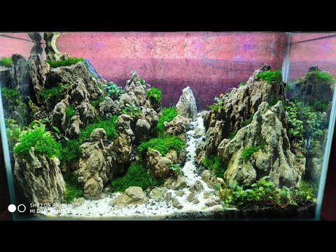 #28 Aquascape Tema Bukit