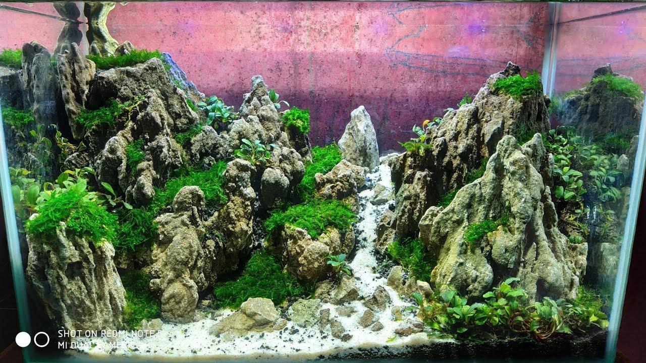 28 Aquascape Tema Bukit Youtube