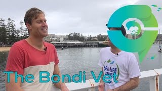 Ocean People Dr Chris Brown The Bondi Vet