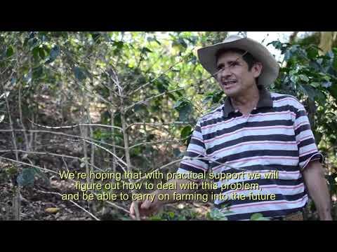 Guaya'b Coffee (Guatemala) Romeo Mendoza talks about coffee rust disease