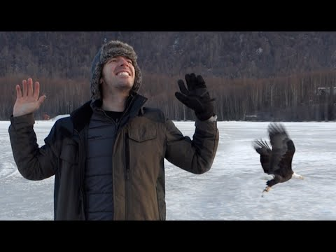 Bald Eagle Takes Fish! - [Living In Alaska 107]
