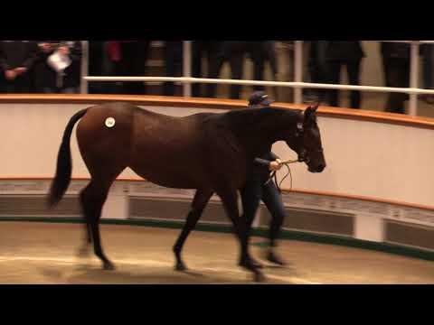 Tattersalls October Yearling Sale Book 1,  2017 Day 1