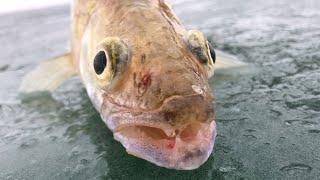 зимняя рыбалка на судака водохранилище Курты январь 2020 fisherman21